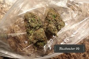 Blackwater OG Marijuana Strain image