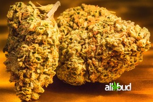 Blue Cheese Marijuana Strain image