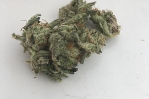 Blue Frost Marijuana Strain image