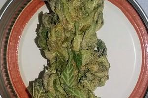 Blue Magoo Marijuana Strain image