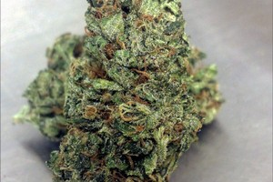 Blueberry Haze Marijuana Strain image