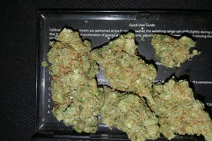 Blueberry Muffin Marijuana Strain image