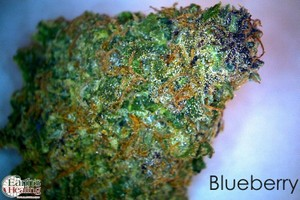 Blueberry Marijuana Strain image