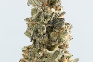 Breakfast Kush Marijuana Strain image