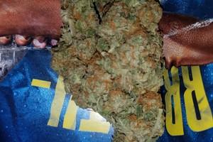 Bruce Banner Marijuana Strain image