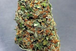 Cheese Marijuana Strain image