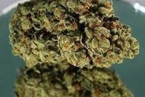 Chem Scout Marijuana Strain image