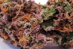 Cherry Gorilla Marijuana Strain image