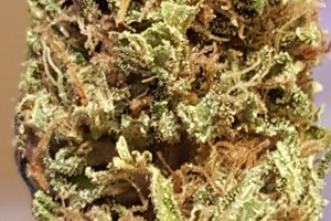 Chiesel Marijuana Strain image