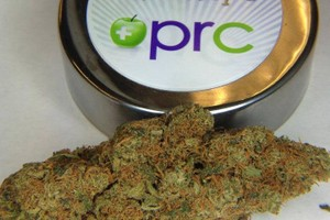 Chocolope Marijuana Strain image