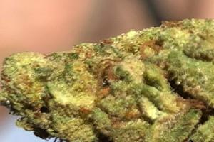 Chronic Marijuana Strain image