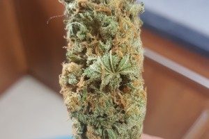 The Church Marijuana Strain image