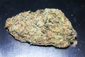 Cookie Glue Marijuana Strain image