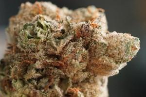 Critical Purple Marijuana Strain image