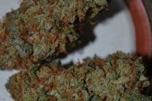 Crunch Berries Marijuana Strain image