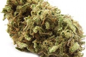 Cuvee Marijuana Strain image