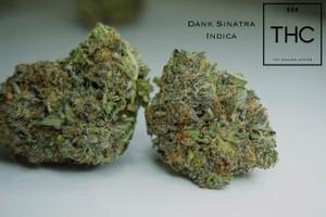dank sinatra Marijuana Strain image