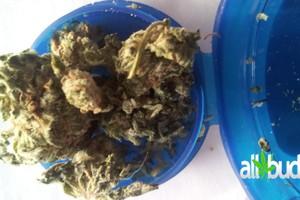 Deadhead OG Marijuana Strain image