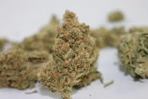 Digweed Marijuana Strain image