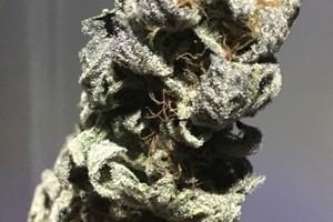 DJ Short Blueberry Marijuana Strain image