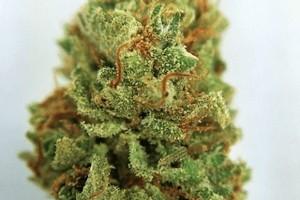 Django Marijuana Strain image