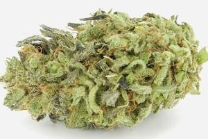 Durban Cheese Marijuana Strain image