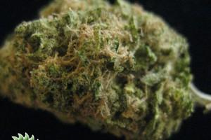 Exodus Cheese Marijuana Strain image
