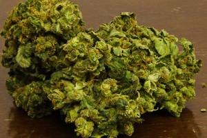Flav Marijuana Strain image
