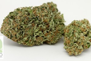 Flo Marijuana Strain image