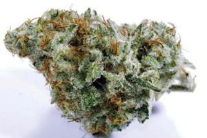 Future Marijuana Strain image