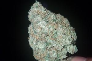 Gorilla Glue #4 Marijuana Strain image
