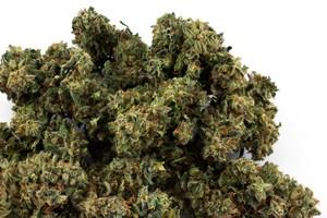 Harle-Tsu Marijuana Strain image