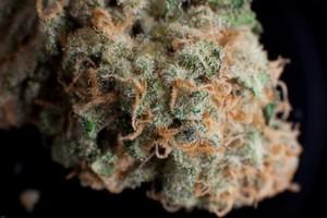 Headcheese OG Marijuana Strain image