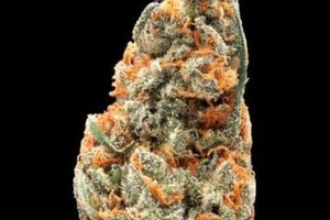 Jack Haze Marijuana Strain image