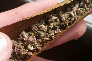 Jager Marijuana Strain image