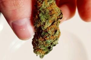 Jet Fuel Marijuana Strain image