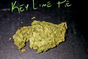 Key Lime Pie Marijuana Strain image