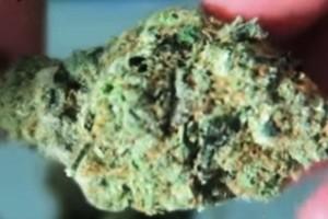 Kid N Kookies Marijuana Strain image