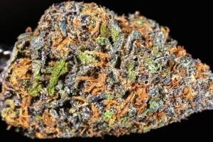 King Cake Marijuana Strain image