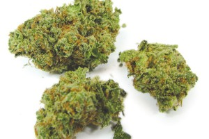 Kosher Jack Marijuana Strain image