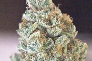 Lemon Cake Marijuana Strain image