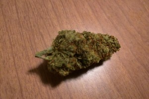 Lemon Haze Marijuana Strain image