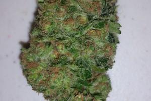 Love Potion #9 Marijuana Strain image