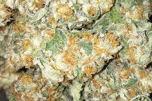 Madman OG Marijuana Strain image