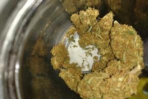 Mickey Kush Marijuana Strain image