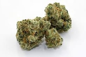 Miss Usa Marijuana Strain image