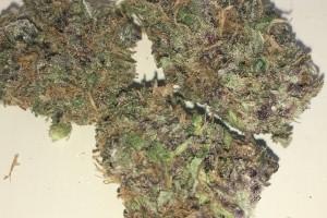 Mr. Pink Marijuana Strain image