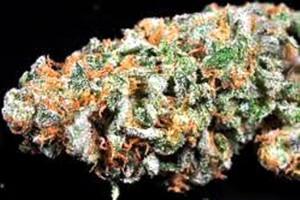 Noggin Marijuana Strain image