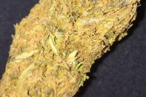 OG Cheese Marijuana Strain image