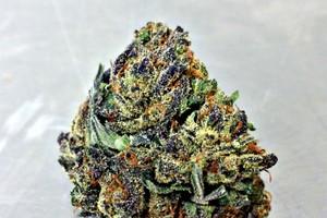 Orange Crush Marijuana Strain image